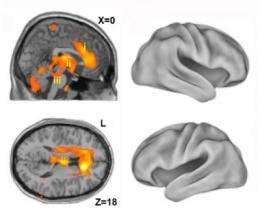 Scientists solving the mystery of human consciousness