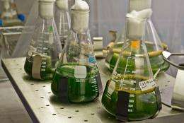 Scripps and SoCalGas system to use algae to capture carbon dioxide