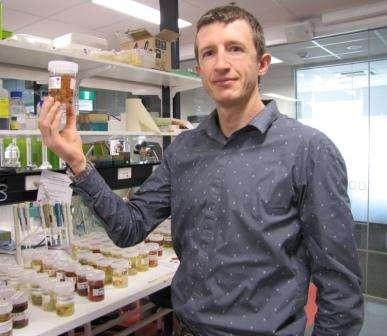 Sea sponges offer hope for new medicines