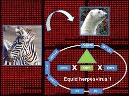 Viruses jumping species and zoo polar bear disease