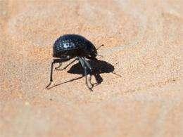 Self-filling water bottle takes cues from desert beetle