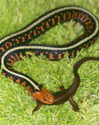 Snakes around world evolve along similar path of poison resistance say biologists