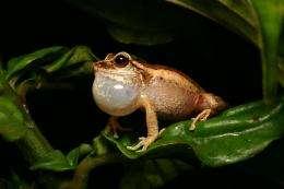 Soundscape ecologists spawn new field