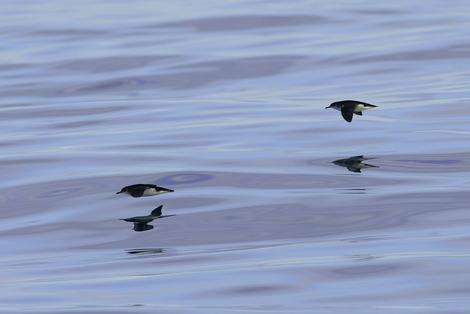 Spying on a bird's life at sea