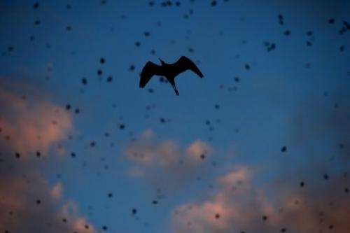 Starlings migrating from northern Europe fly on November 8 over Rome