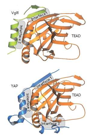 Structural biology: Characterizing a cancer complex