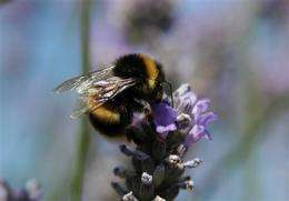 Studies say commonly used pesticide may harm bees (AP)