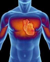 Study closes debate on folic acid and heart disease