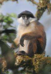 Study highlights new mammal species for promoting conservation fundraising