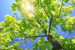 Sunlight and vitamin D findings may help understanding of autoimmune diseases