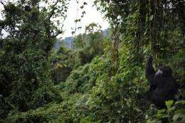 The 200 million hectares or so of forests are second only to the Amazon rainforest in size