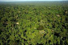"""The Amazon is known as the """"Lungs of our planet"""" as it produces roughly 20% of the Earth's oxygen through photosynthesis"""