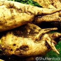 The gene that boosts sugar beet yields