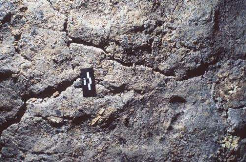 The oldest footprints of modern-day man are seen in the Chauvet cave in 1999