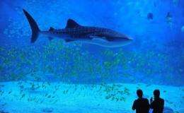 There were 12 deaths in 46 shark attacks in 2011