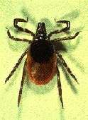 Tick season starting early this year