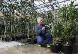 Tiny plants could cut costs, shrink environmental footprint