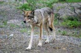 Top predators key to extinctions as planet warms