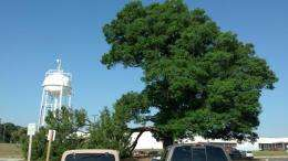 'Tree of Life' still stands after Derecho