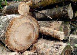 Tree-ring science takes on the modern age