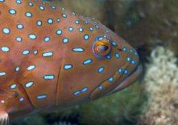 DNA evidence shows that marine reserves help to sustain fisheries