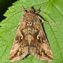 UK summers see moth population boom