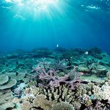 Viruses could be the key to healthy corals