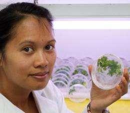 Wheat bacteria may ward off plant disease