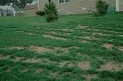 When the grass isn't always greener