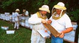 Winter honey bee losses decline