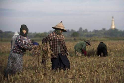 World rice stocks are expected to have grown 7% this year, the FAO says