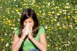 Worm therapy for hay fever? More research is needed