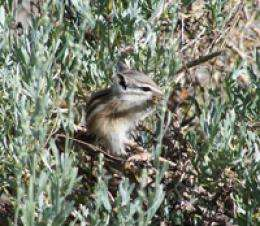 Yosemite's alpine chipmunks take genetic hit from climate change