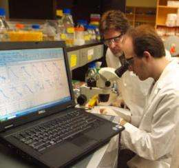 Zebrafish may help speed drug discovery