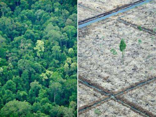 A Greenpeace photo of Sumatra island shows an area of rainforest after logging and a protected area, October 16, 2010