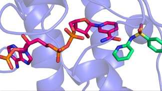 Antibiotics: A new understanding of sulfonamide nervous system side effects