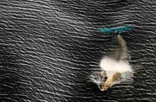 An undated photo released by the Antarctic Ocean Alliance shows a whale breaching the surface in Antarctic waters