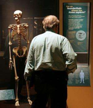 A visitor looks at an exhibit at the Field Museum in Chicago, Illinois, on March 7, 2006