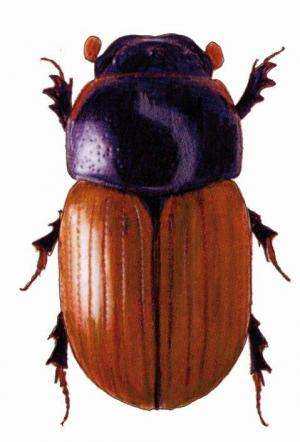Beetles modify emissions of greenhouse gases from cow pats