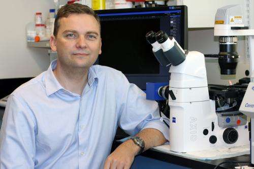 Cancer researchers discover root cause of multiple myeloma relapse