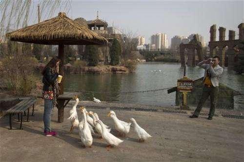China bird flu mutates, might infect mammals
