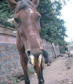 Combating key viral diseases in livestock in Ethiopia
