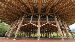 Discovering the architect of bamboo