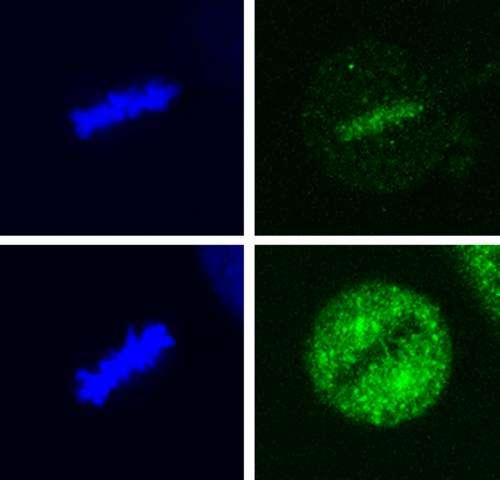 Discovery that specific protein modification important in cancer development