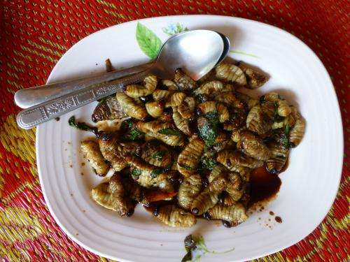 Eating insects: Like them stir fried or curried?