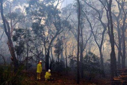 Firefighters battle a bushfire near Faulconbridge in the Blue Mountains on October 24, 2013