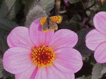 Flower research shows gardens can be a feast for the eyes – and the bees