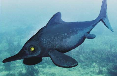 Fossil saved from mule track revolutionizes understanding of ancient dolphin-like marine reptile