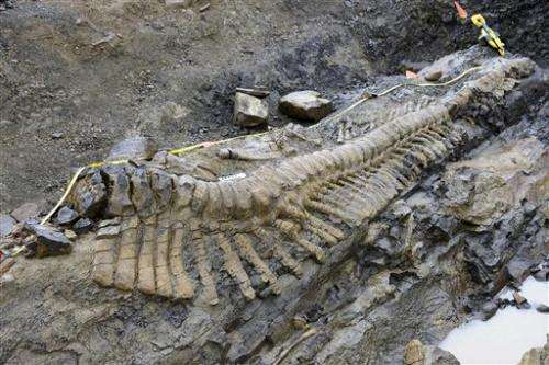 Full dinosaur tail excavated in northern Mexico