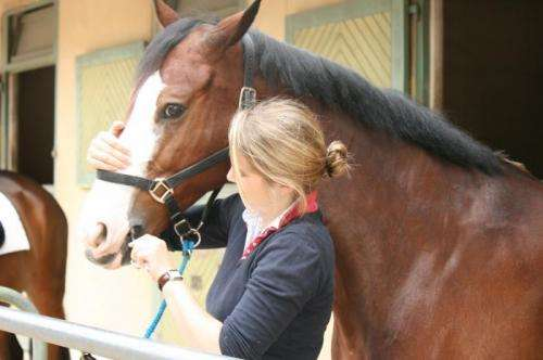 Horses don't have stage fright—but their riders do